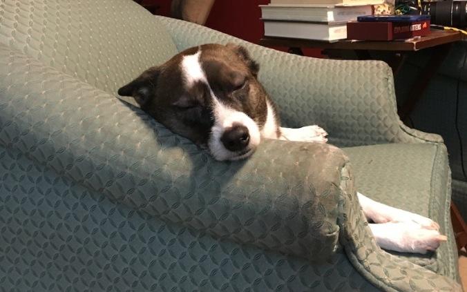 Sleeping Ella